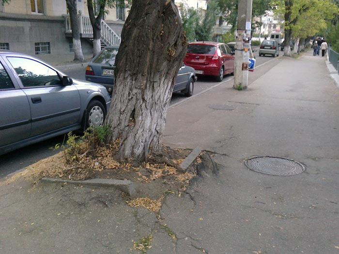 большие деревья разрушают город