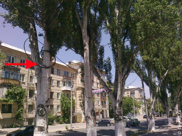 Смотанный провод Севгорсвета, висящий на дереве