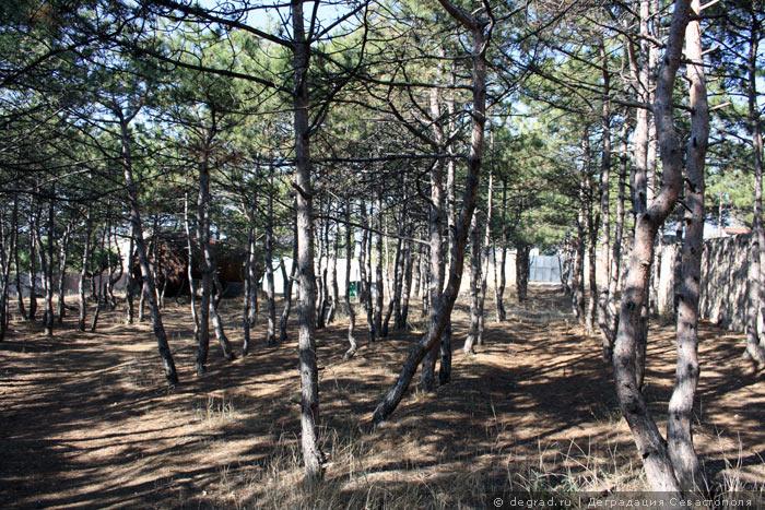 Учкуевский лес, застраиваемый коттеджами